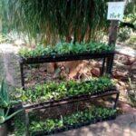 Garden Centre Seedling Stand