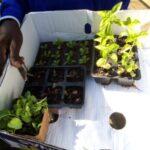 Seedlings from the Garden Centre